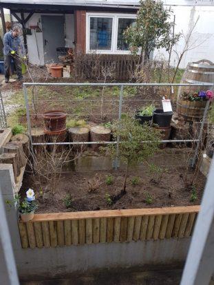 Hecke, Zaun, Rasen, Gartengestaltung